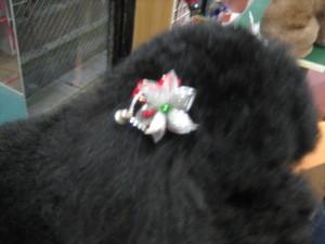 20101209_001