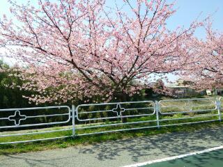 春も近い…