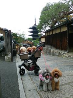 またまた京都
