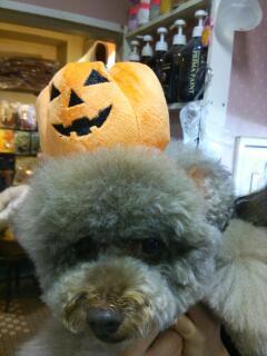 かぼちゃ姫part2