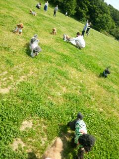 看板犬の休日